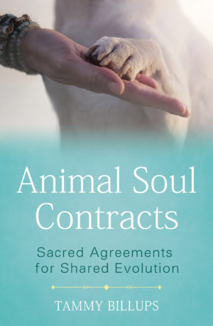 Animal Soul Contracts: Sacred Agreements for Shared Evolution