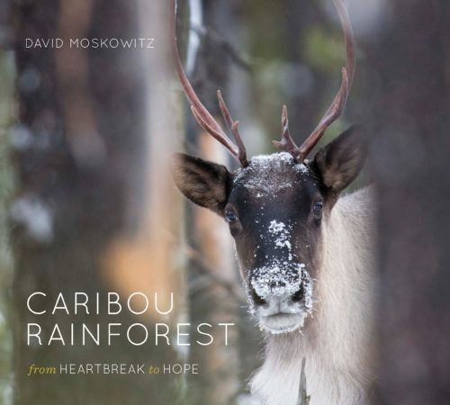 Caribou Rainforest: From Heartbreak to Hope
