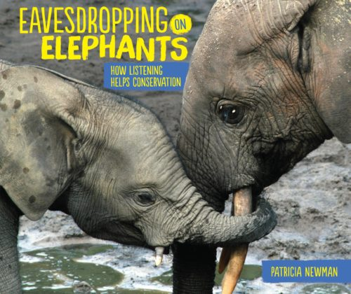 Eavesdropping on Elephants: How Listening Helps Conservation